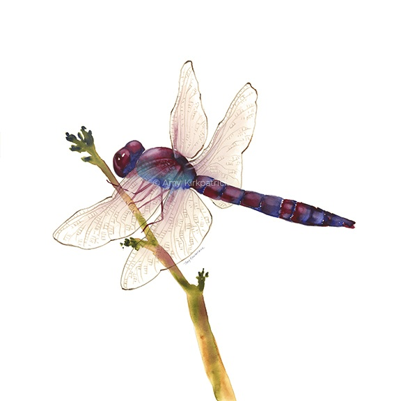 Painted Blue Dragonfly